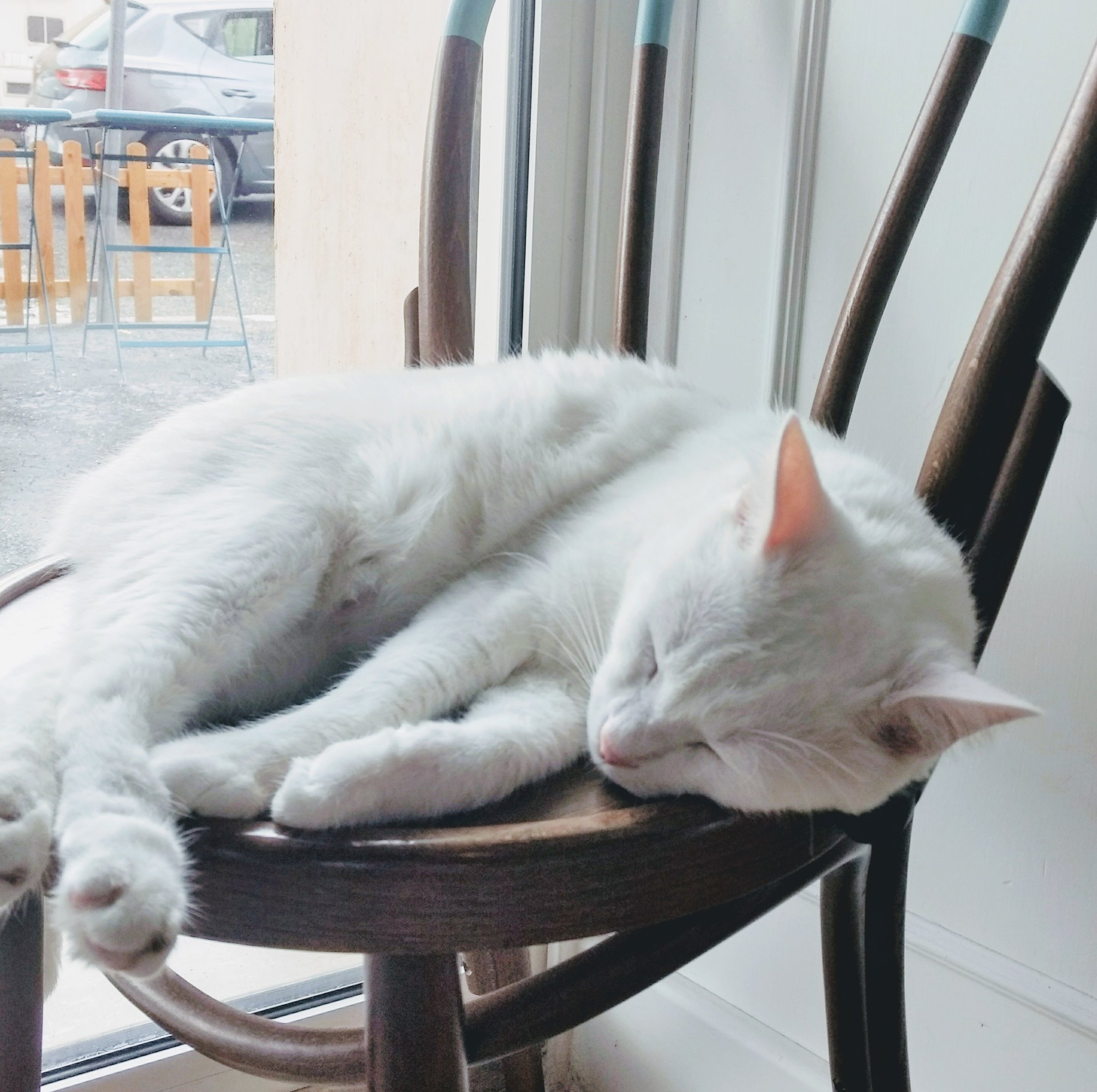 We even found cousin of our Sasha from pawquarters, sleeping on the chair!