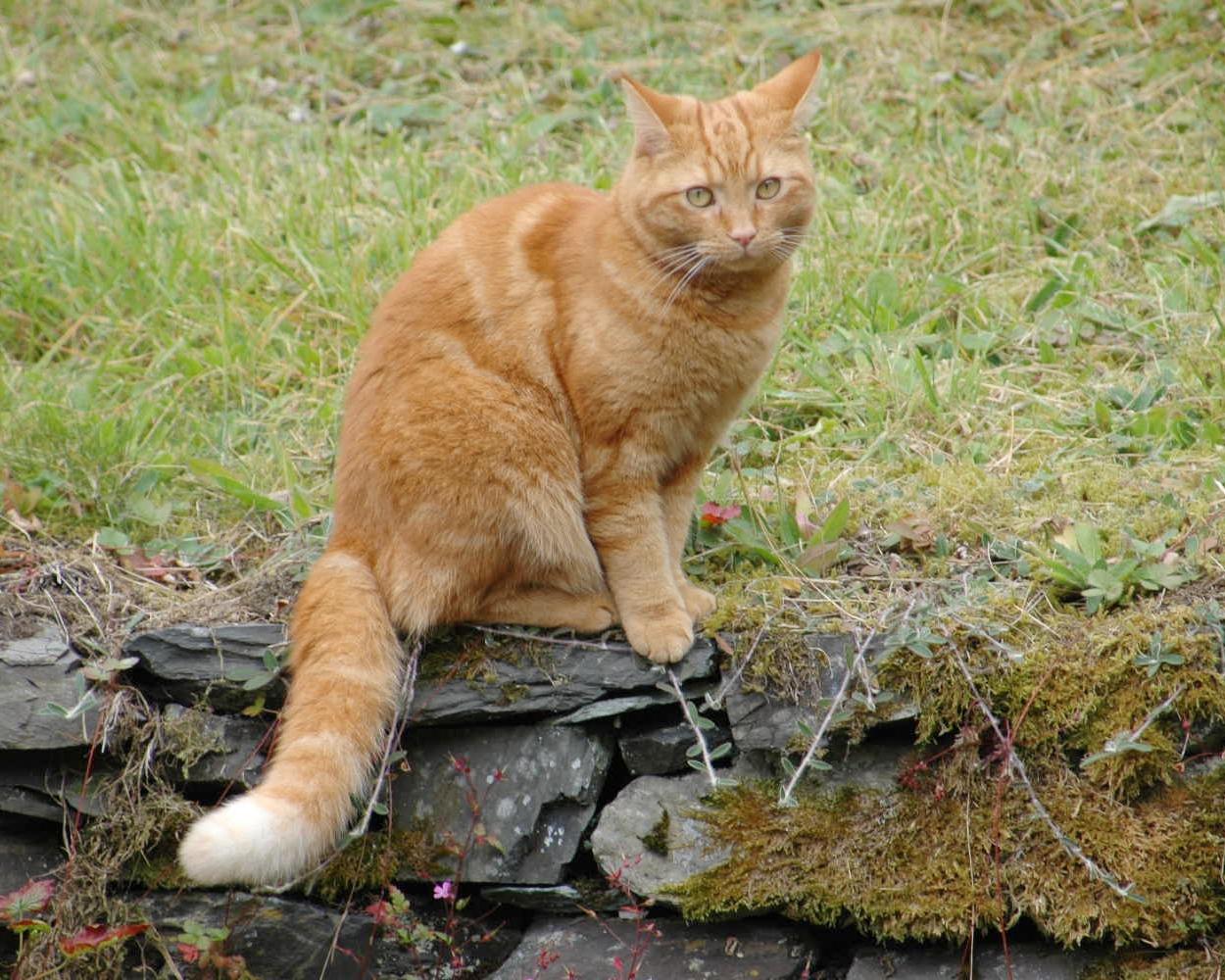 Tabby on garden pawtrol