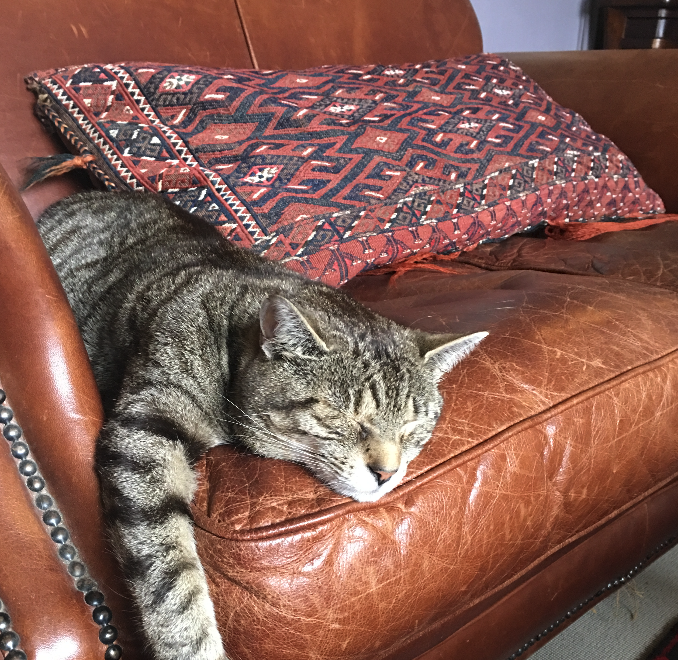 Mr B, on couch warming duties.