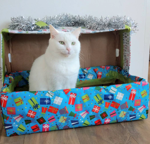 When you get everything you've ever wished for…. a box!