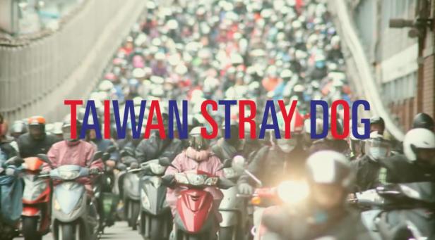 TAIWAN STRAY DOG // 衝浪旅行 x 拍片記實