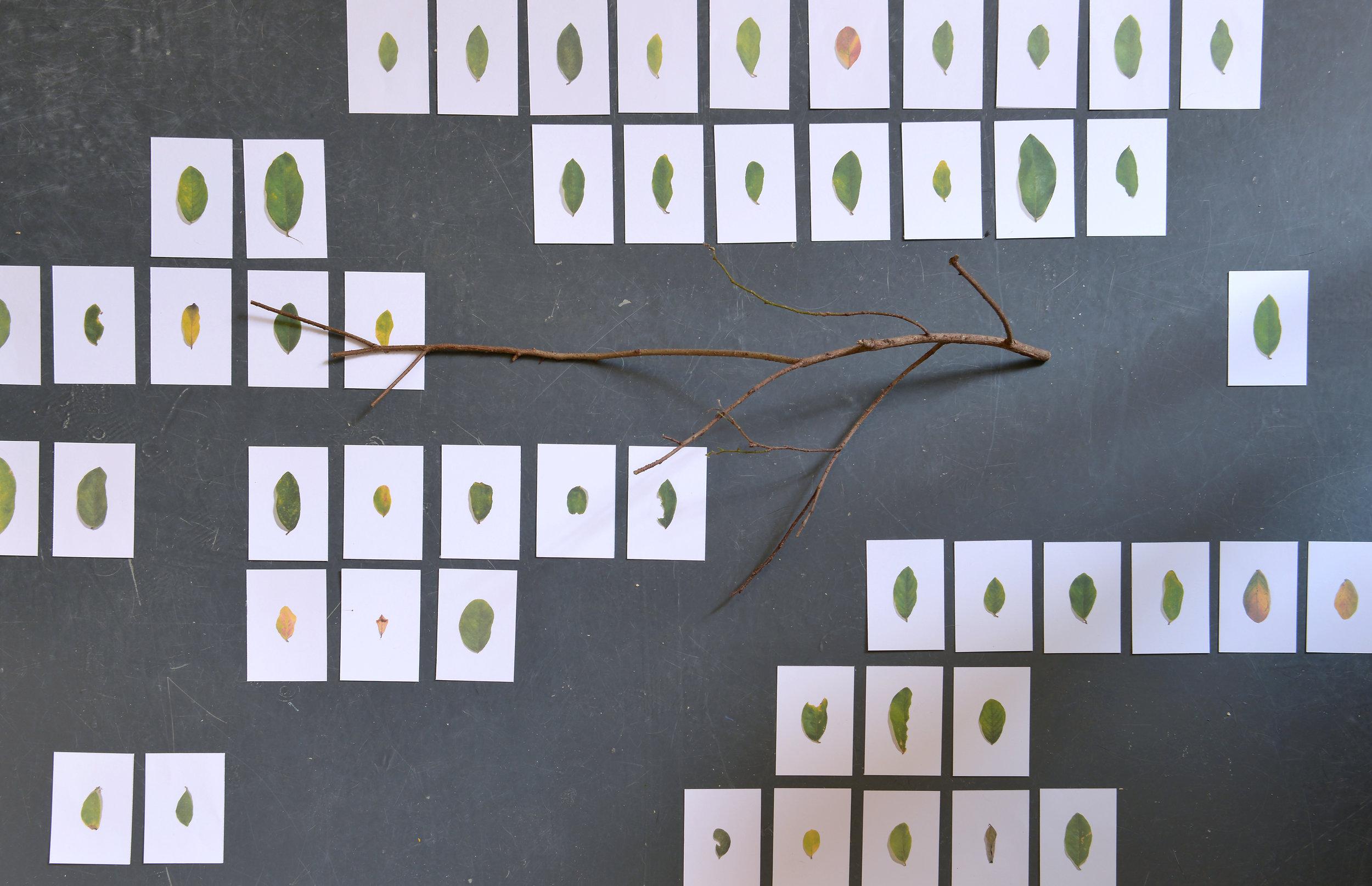 黄永生,《记住一棵树》 ,选自《刺眼的黑色》系列,2018年。无酸纸艺术微喷,树枝,尺寸可变。图片由艺术家提供。