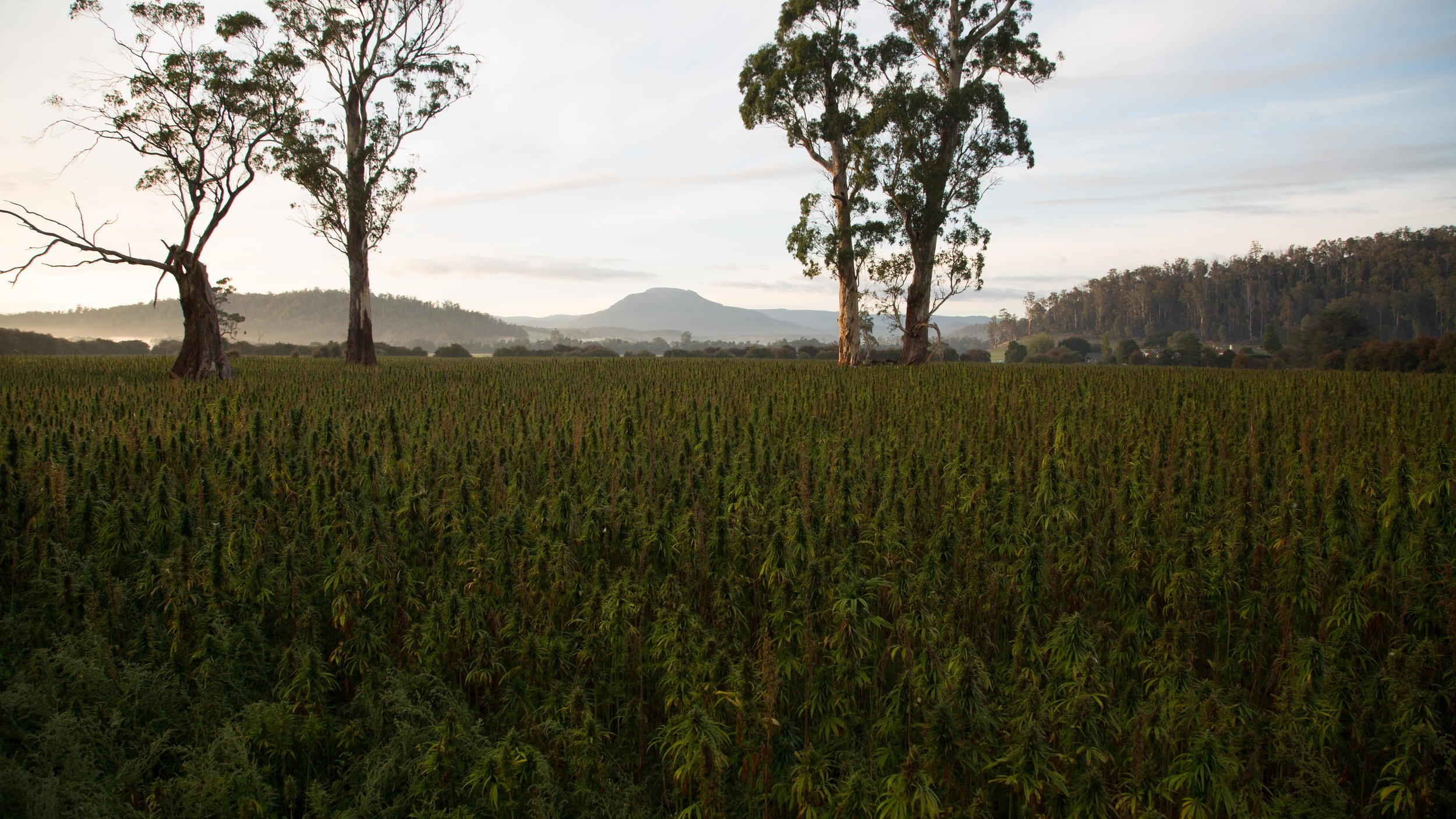 Each product can be traced back to the idyllic Tasmanian farmland where it was grown