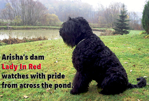 0-Lady-In-Red-Across-the-Pond.jpg