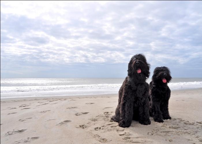 On-the-Beach.jpg