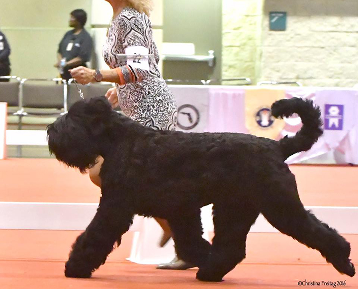 Arisha-2016-AKC-Nationals-new.jpg