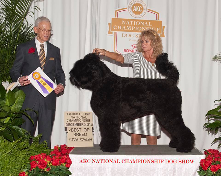 Arisha-BOB-2016-AKC-National-Championship-new.jpg