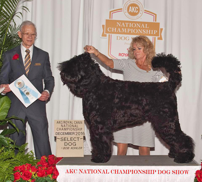 Oli, Select Dog, 2016 AKC Royal Canin National Championship, Orlando