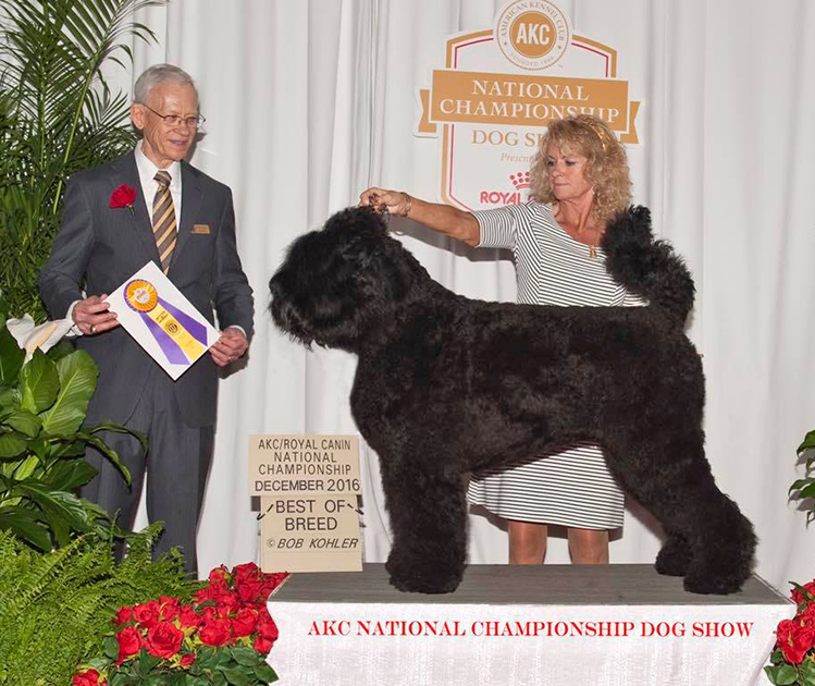 Arisha, Best of Breed, 2016 AKC Royal Canin National Championship, Orlando