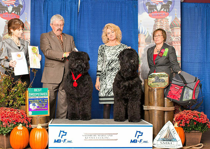 2014 BRTCA National Specialty Sweepstakes - Arisha (right) won Best of Breed and Mishka won Best of Opposite Sex