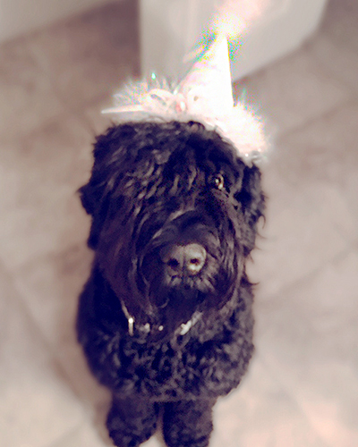 Bernadette (Guardian Bears All You Need Is Love) celebrates her first birthday