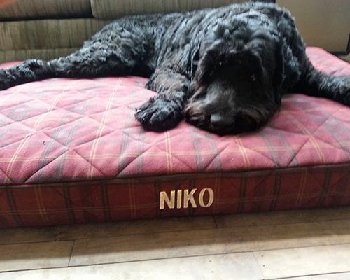 Niko (Guardian Bears American Dreamer)