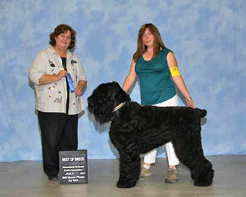 Juri, Best of Breed, IABCA Show, July 2012