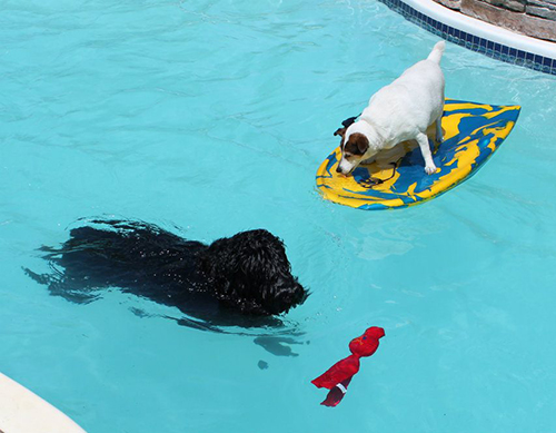 Bree-and-Lily-in-pool.jpg