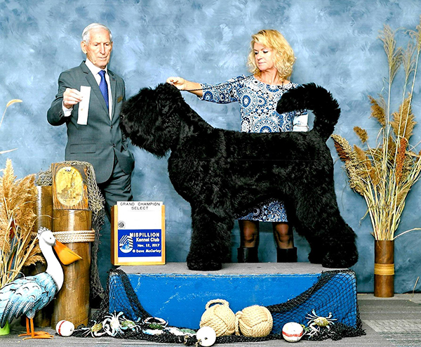 2017 Black Russian Terrier Club of America (BRTCA) Supported Shows - Select Dog