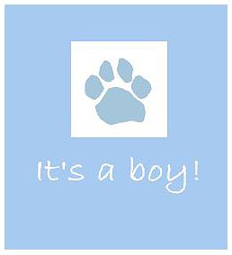 Its-a-boy.png