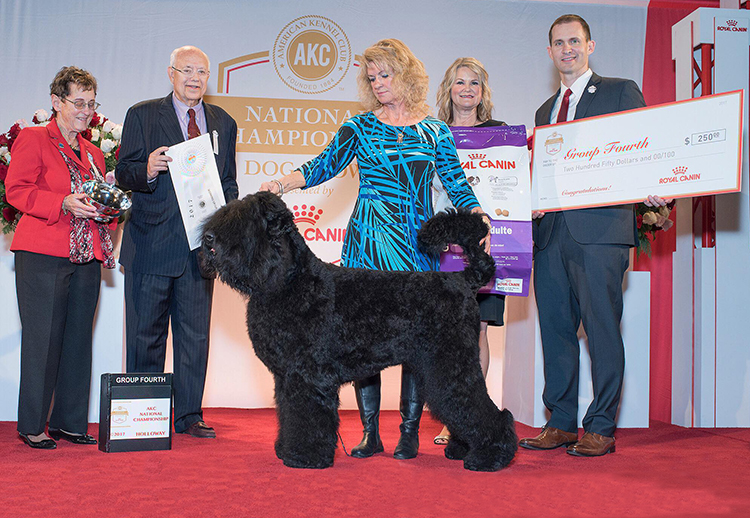 Oli, Working Group 4, 2017 AKC Royal Canin National Championship Oli is the first Black Russian Terrier to win a group placement at the AKC National Championship!
