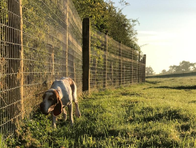 Dogwood Adventure Play Secure Enclosed Dog Field Darlington Stockton Teesside