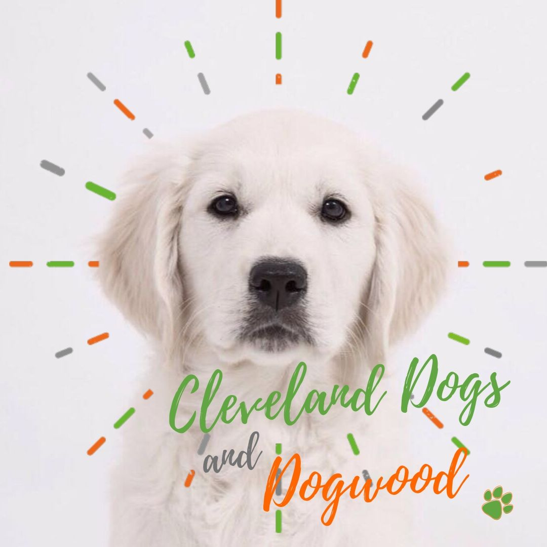 Dogwood and Cleveland Dogs.jpg