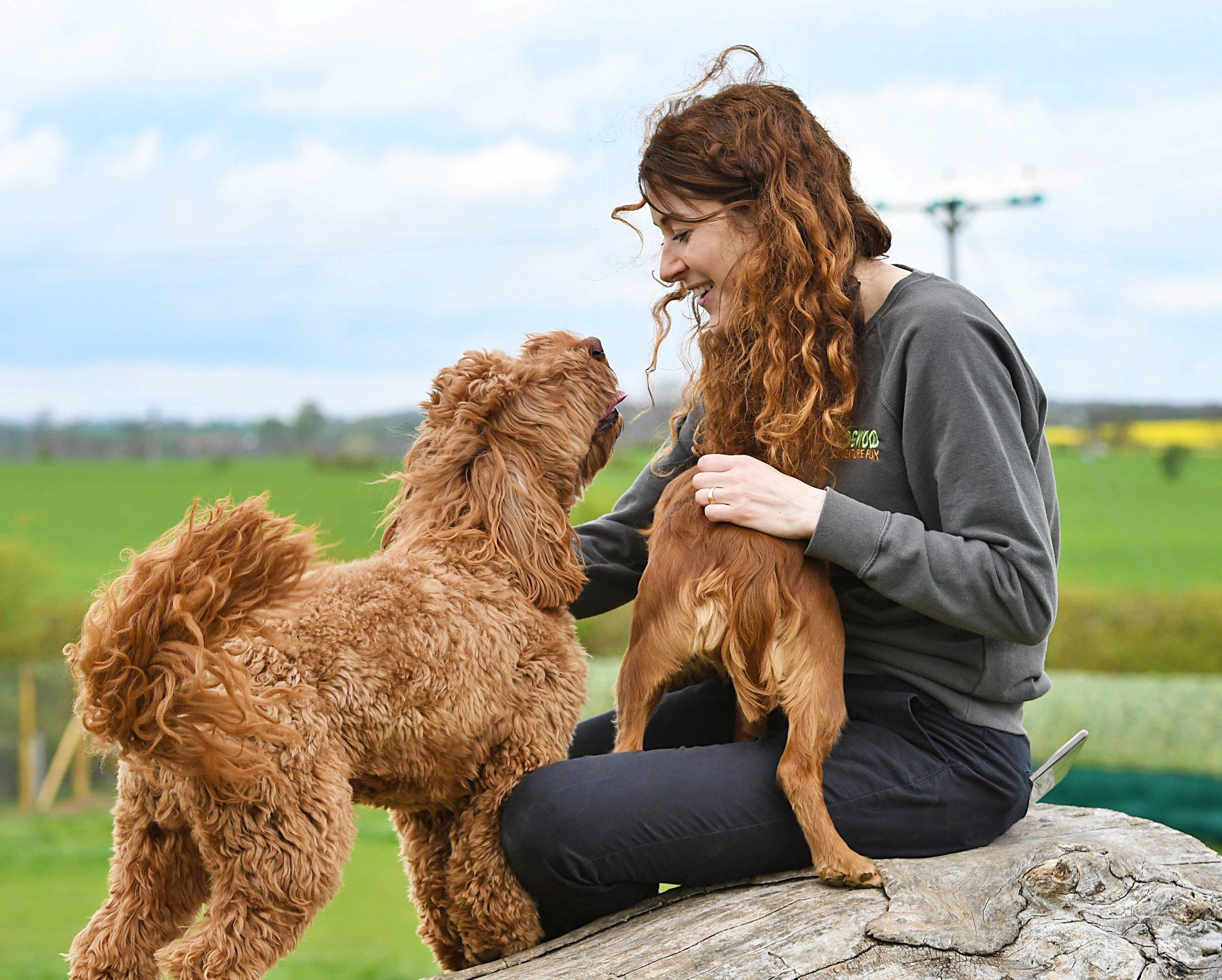 Dogwood Scentventure Katie Guastapaglia