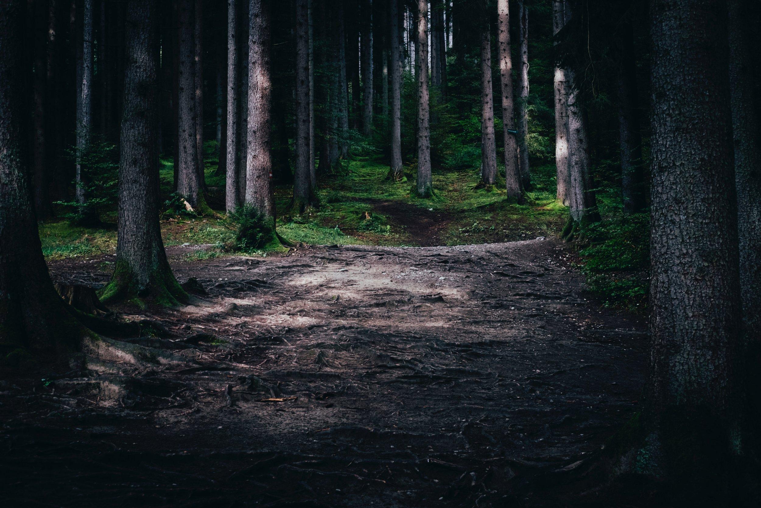 Svensk skov.jpg