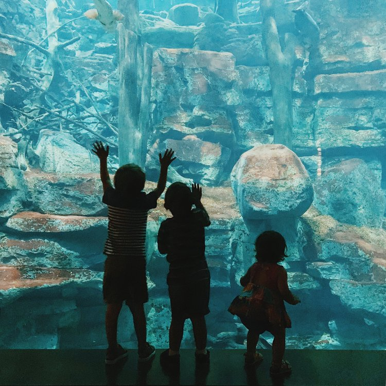 An Afternoon at the Tennessee Aquarium -