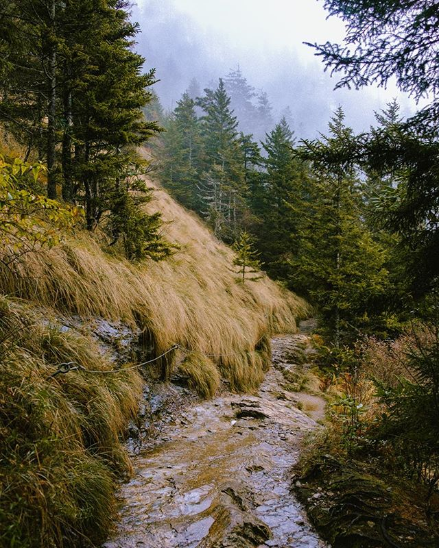 Hey this is @lvcaswiman back again, last but not least I'm going to leave you with a photo from one of my favorite hikes. ⁣ ⁣ Alum Cave to Mt. Leconte is out of a fairy tale. I feel like I'm hiking through the Pacific Northwest every time I hike it. My favorite conditions are when it's rainy or when I get above the tree line before the sunrises, but even as a casual midday hike, it's so worth it. Roughly 10 miles roundtrip, it does take a majority of the day, so make sure and pack wisely! This specific photo was shot while hiking back down from the lodge about 20 minutes into the descent. Scenes like this are everywhere in the Smokies if you're willing to hike a little bit to find them!⁣ ⁣ Thanks so much for having me this weekend, if you have any questions about any of my photos, areas in East TN to photograph and explore, or my career as a freelance photographer, please don't hesitate to ask! 🌄 #OnlyTennISee