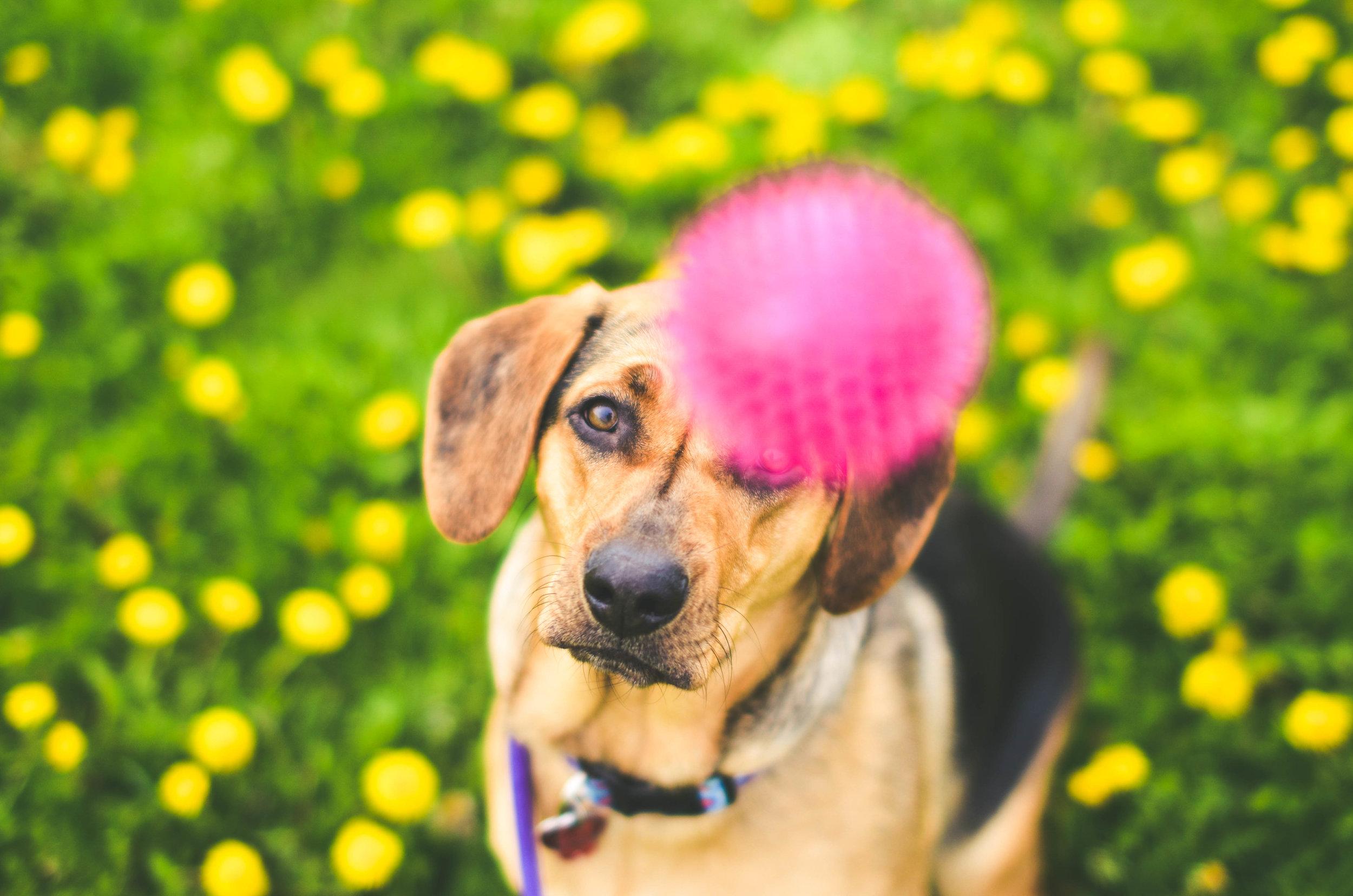 Nala Spring Color-0967.jpg