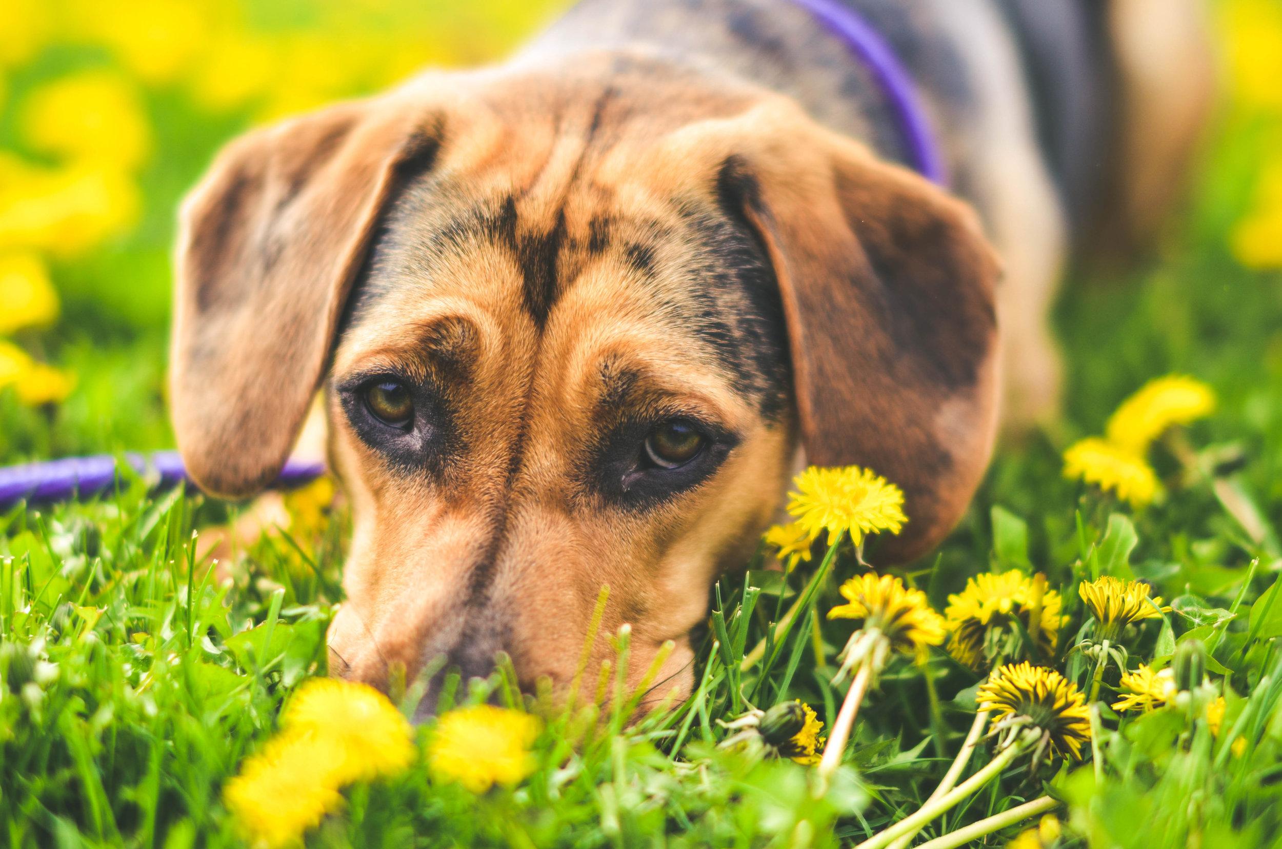 Nala Spring Color-0889.jpg