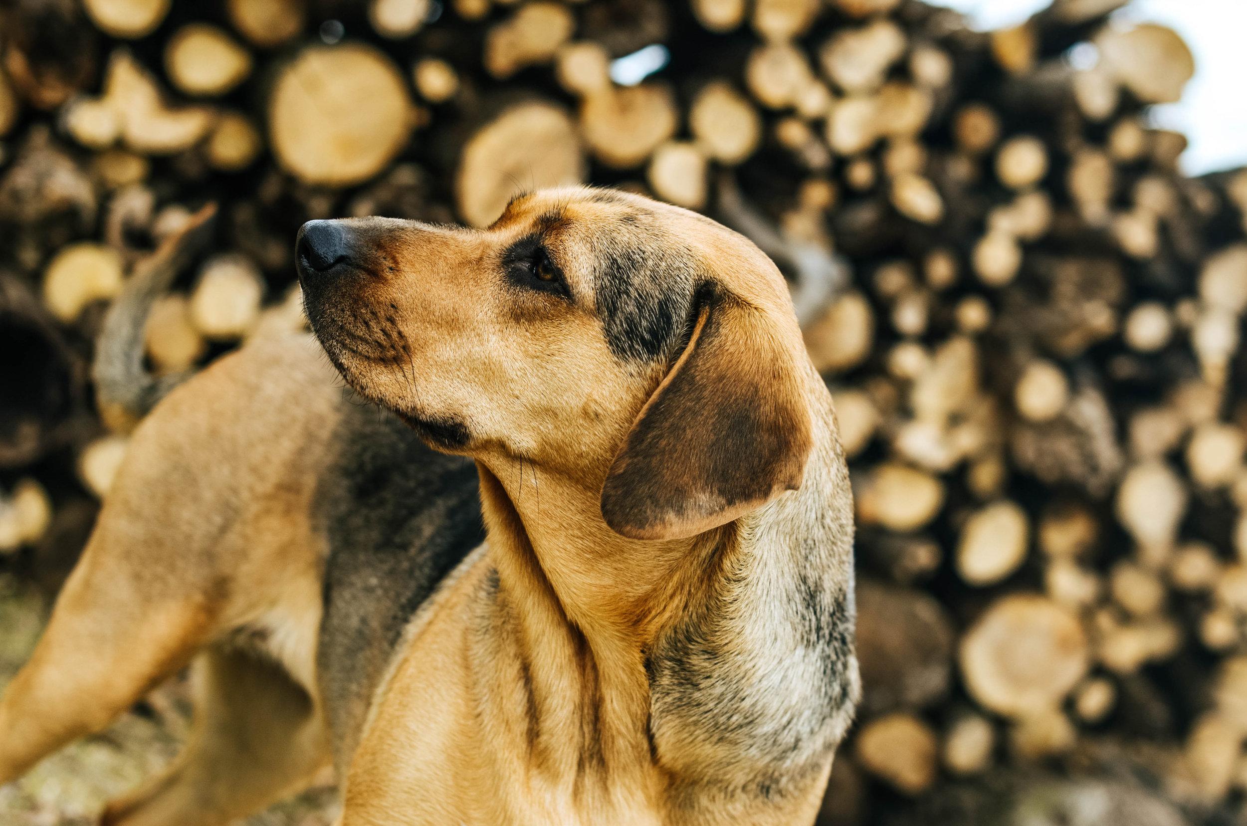 nala wood pile-0415.jpg