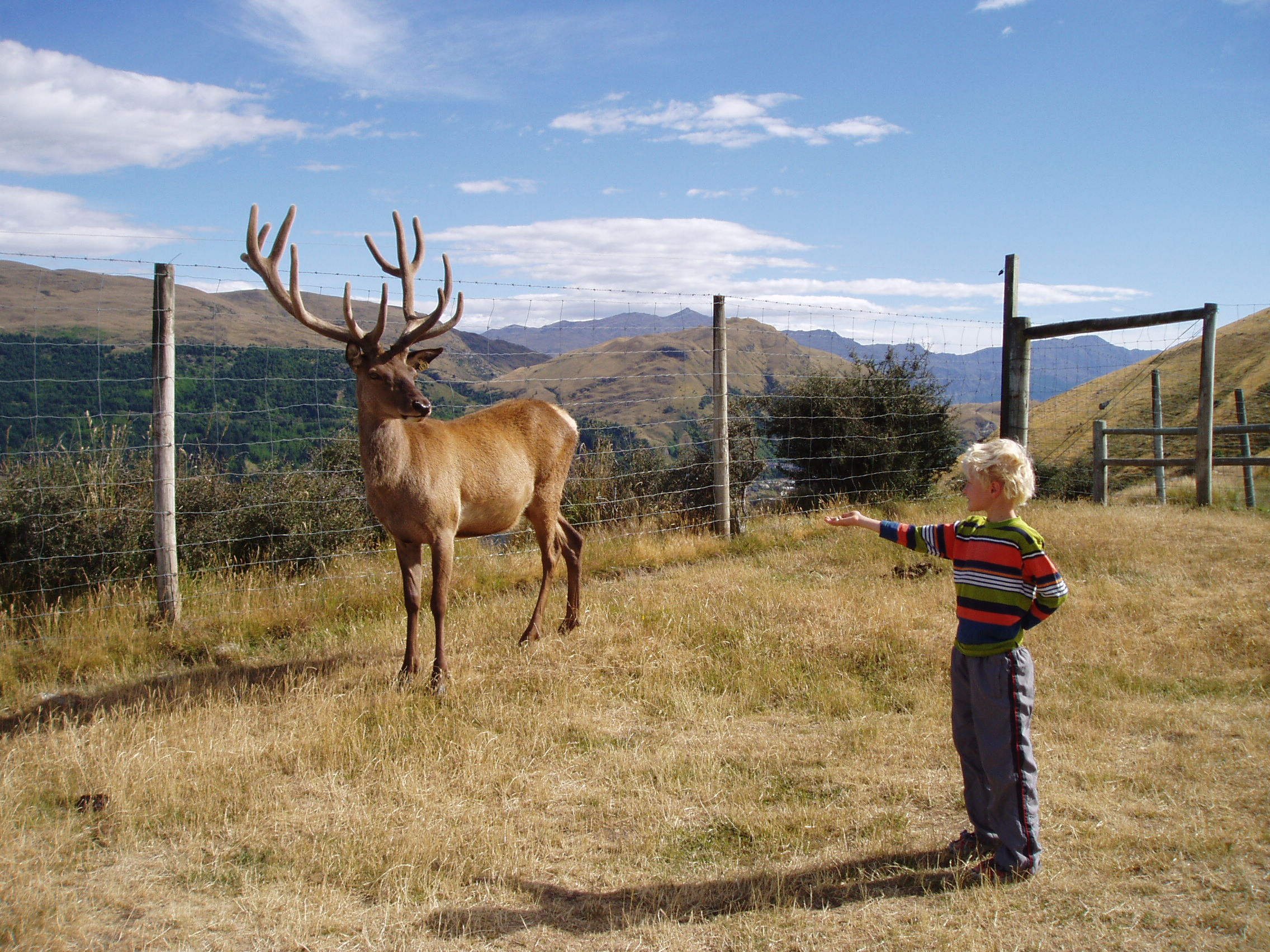 Joe and a stag, Deer Park Heights.