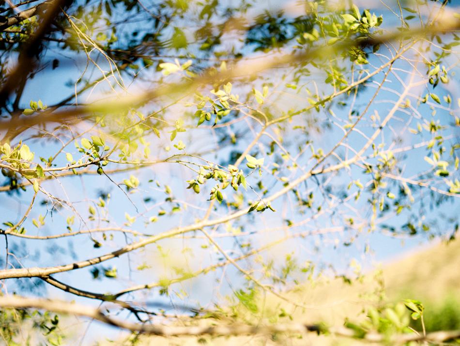 170812_LisaLPortraitsFilmFuji400H_MTalaveraPhoto Blog-13.jpg