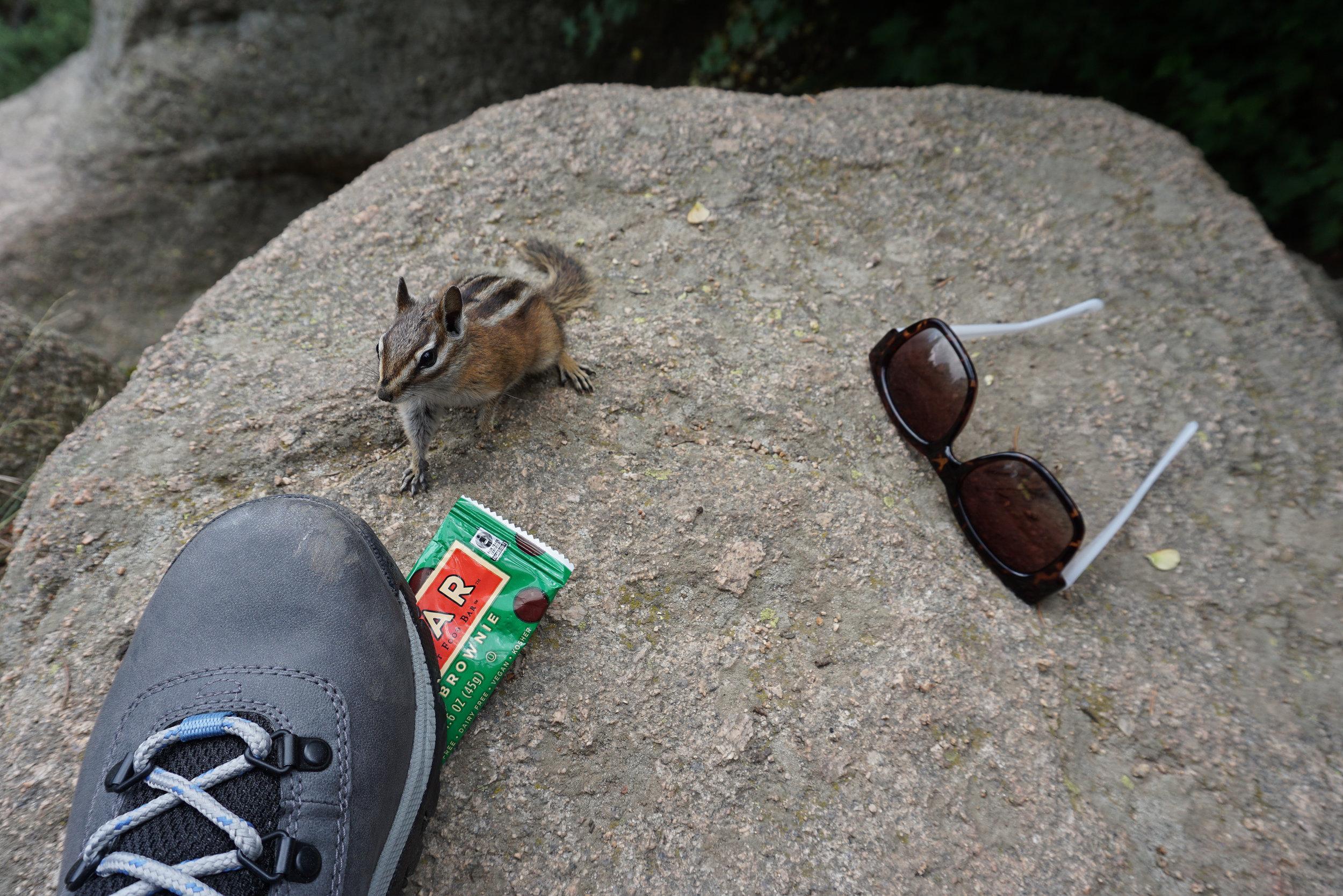 Chipmunks on Maxwell Falls Trail have no fear