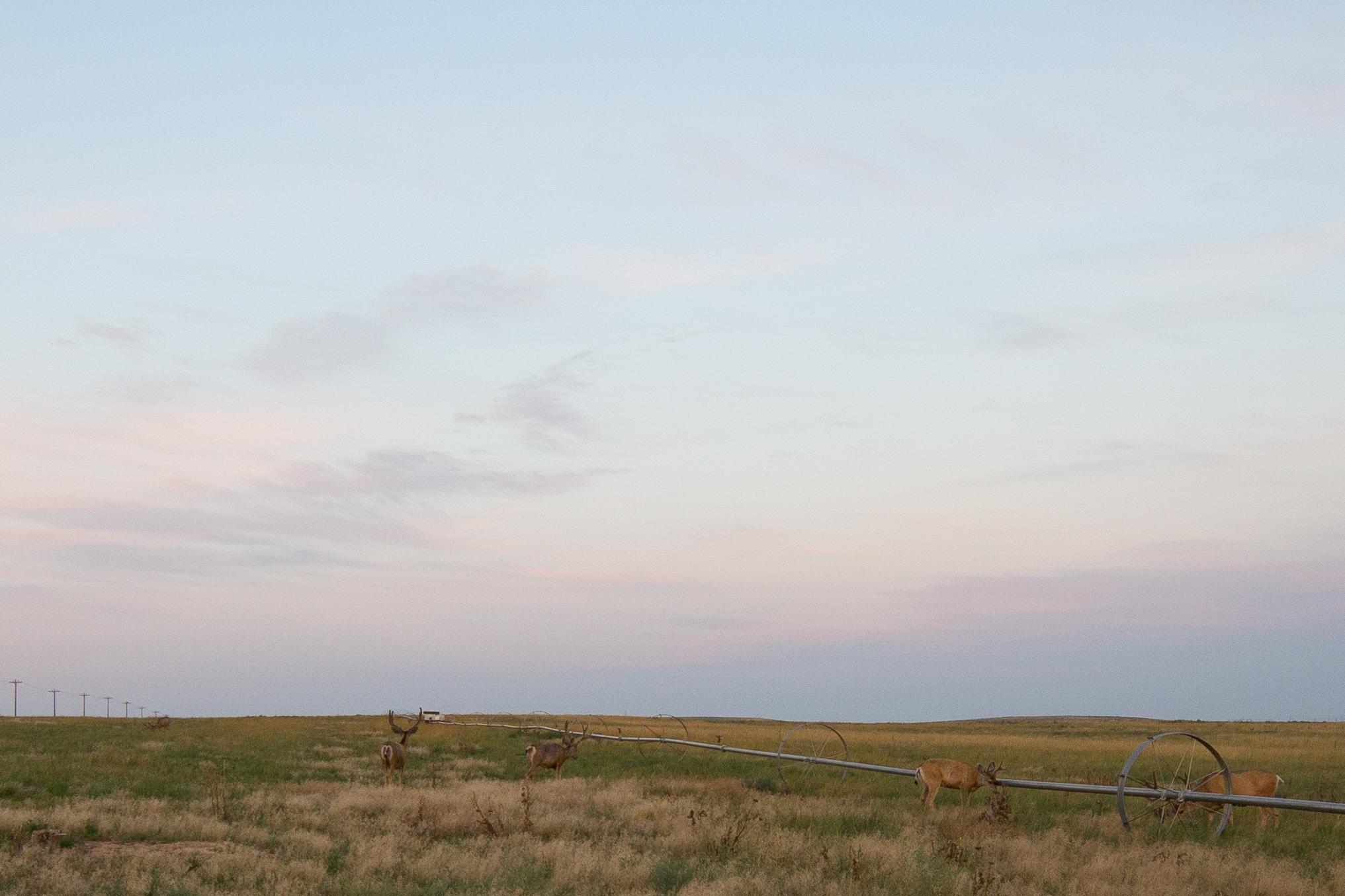 Rocky Mountain Arsenal National Park