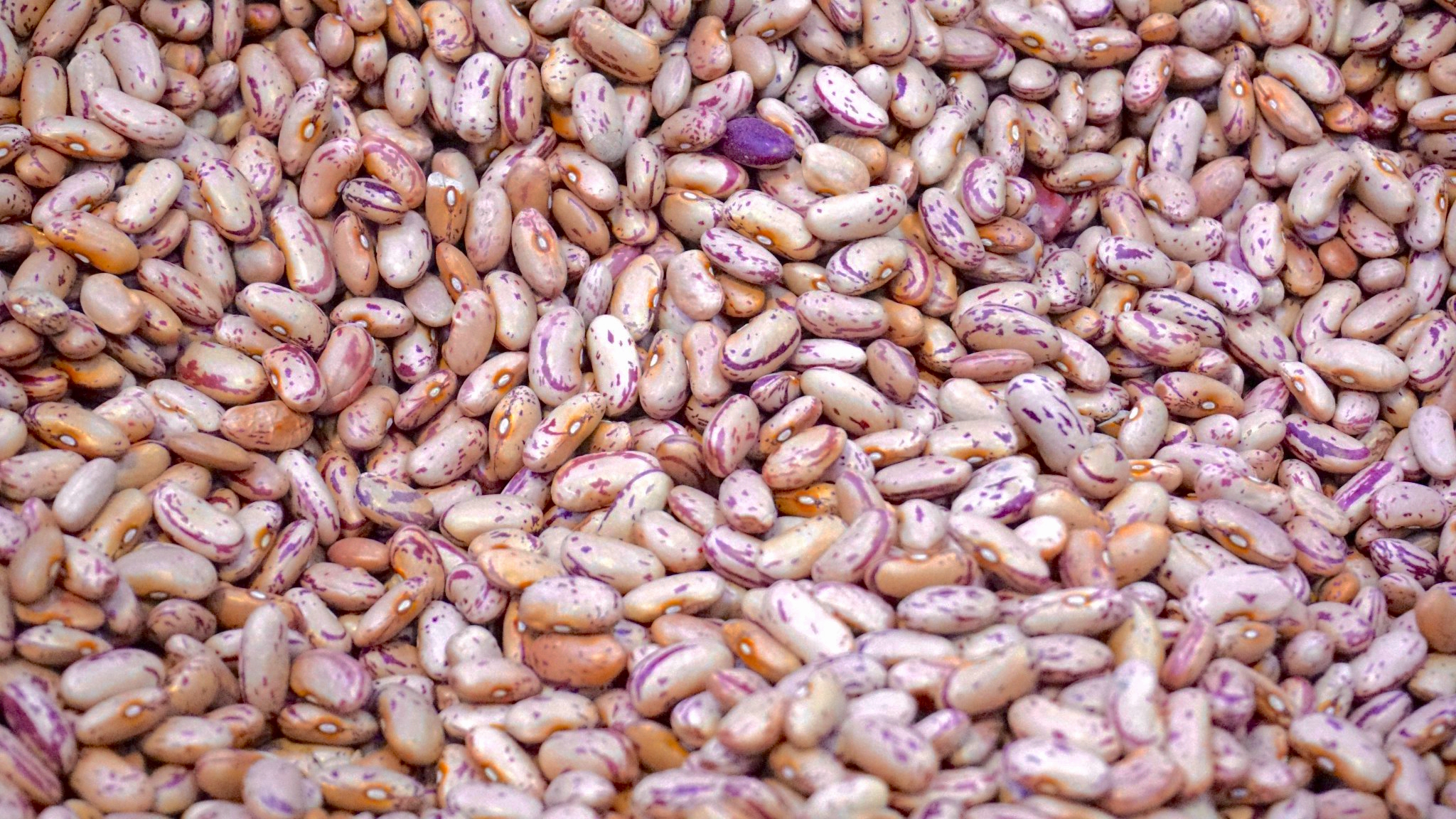 Beans are high in fiber and protein.
