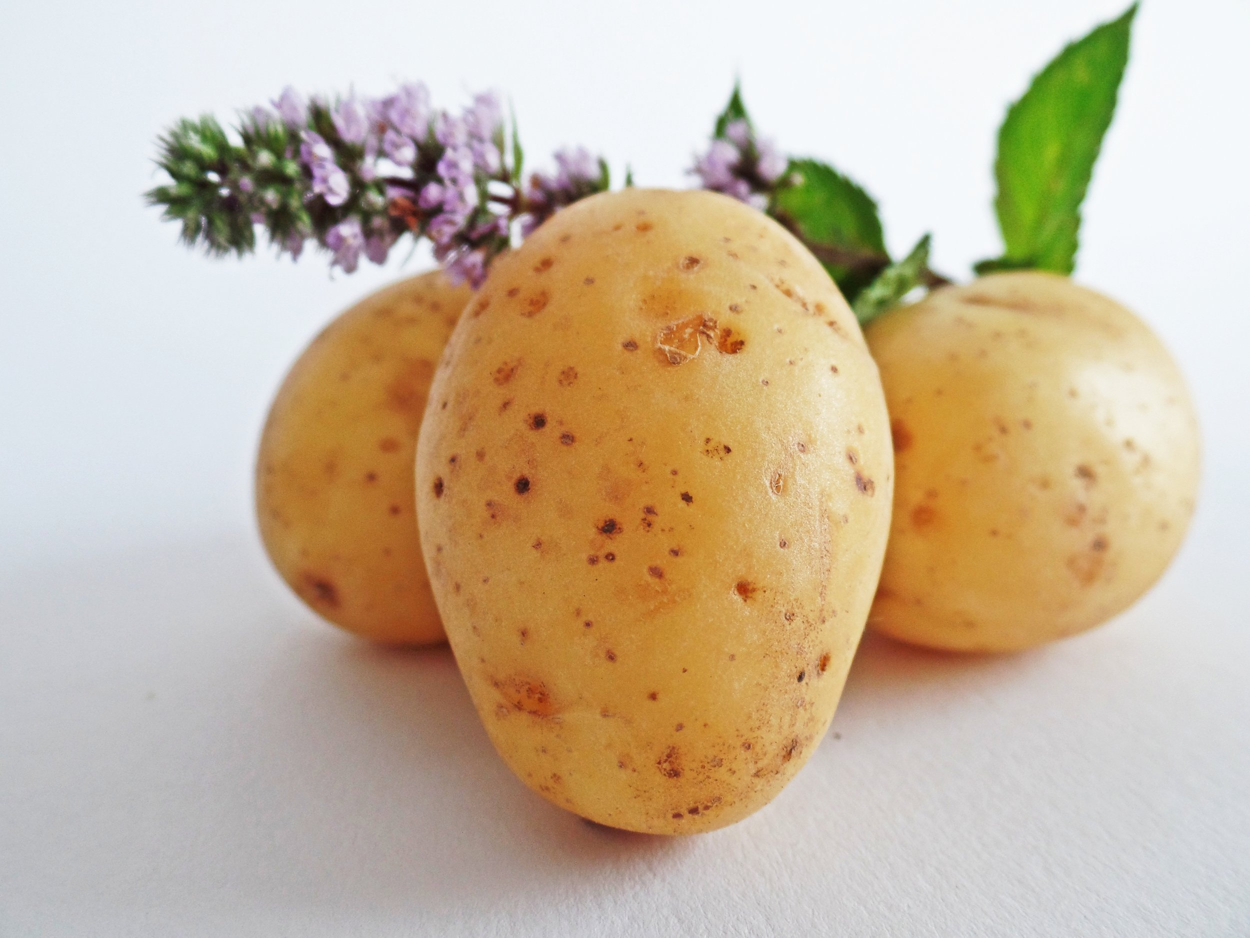 potato.jpeg