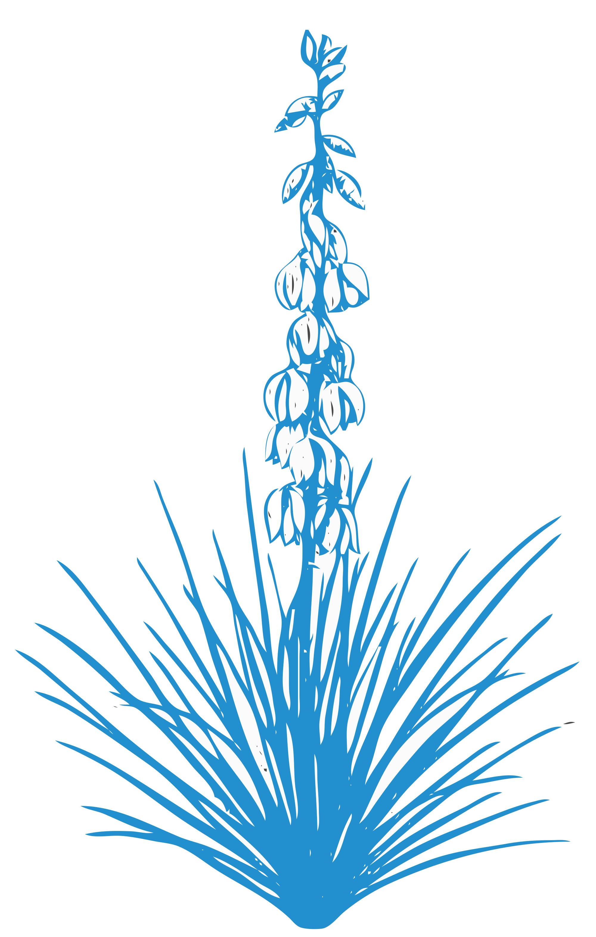Yucca Sketch