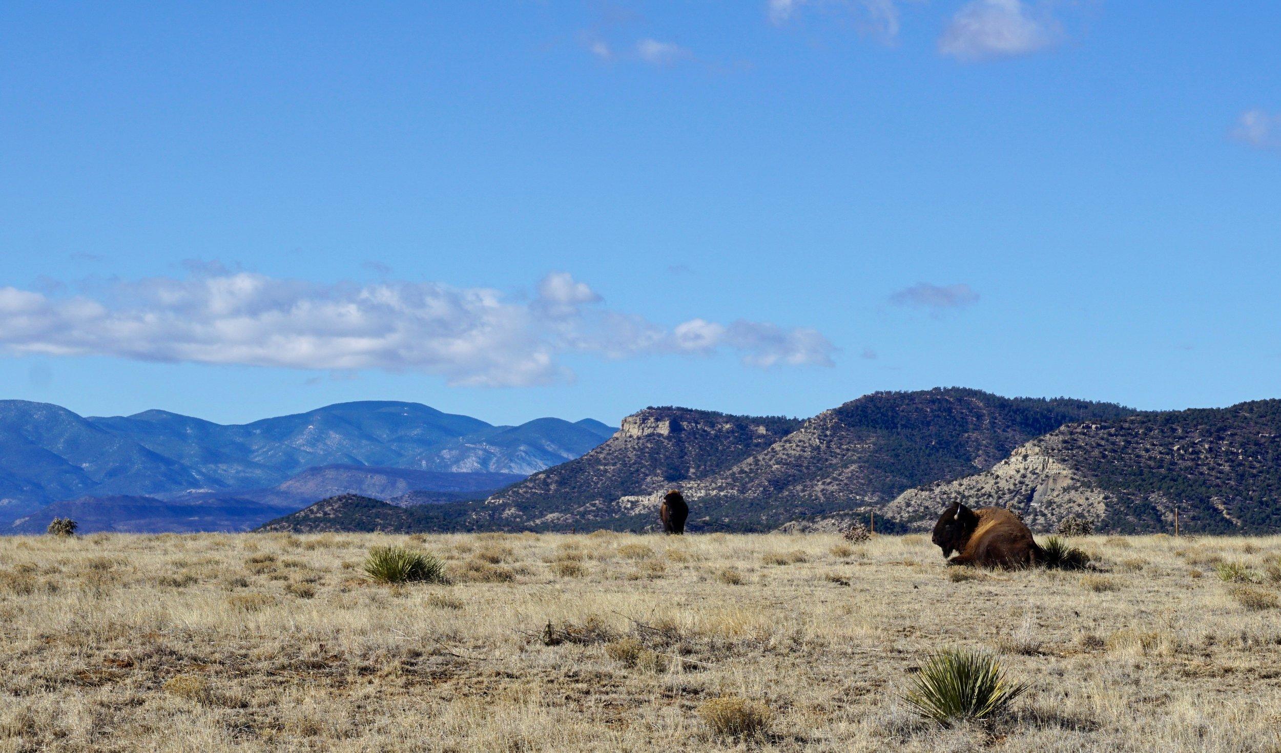 Cimarron New Mexico