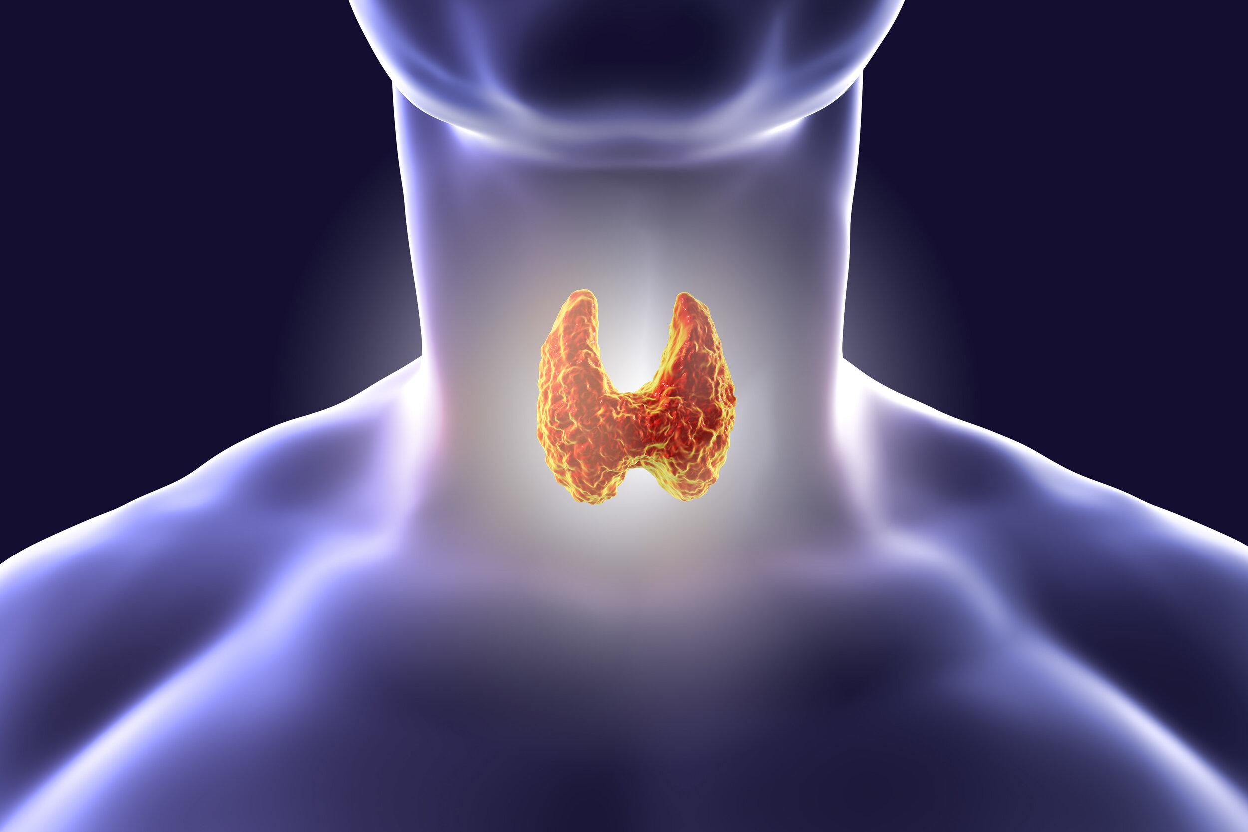 thyroid gland.jpeg