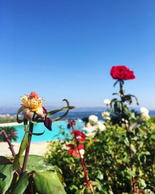 flower greece.jpg