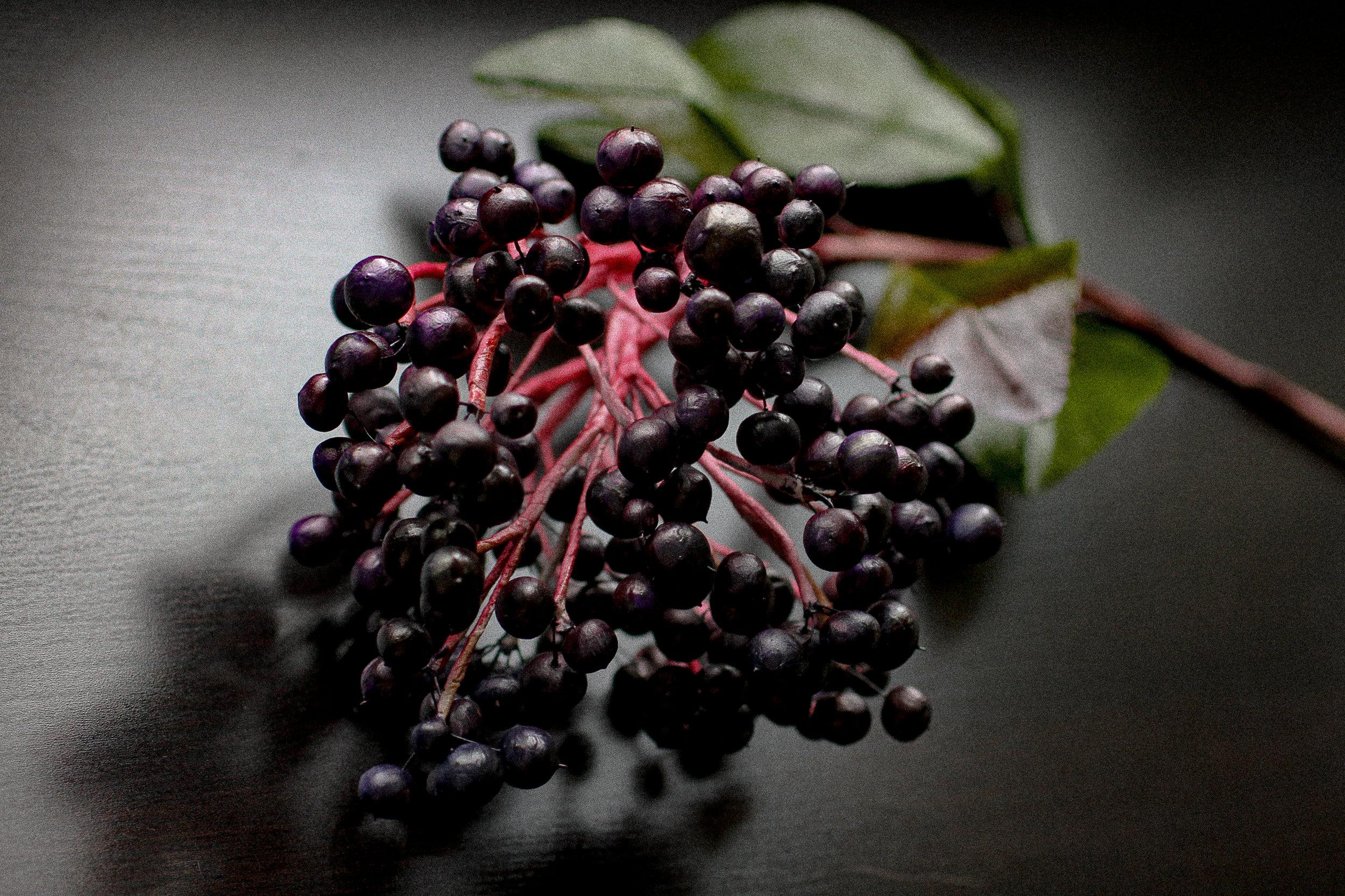 Elderberry-1.jpg