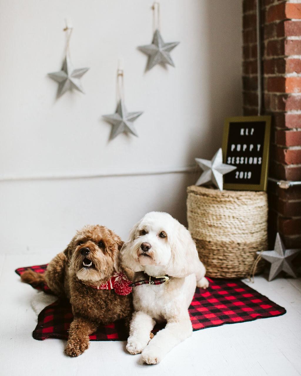 Puppysessions-6.jpg