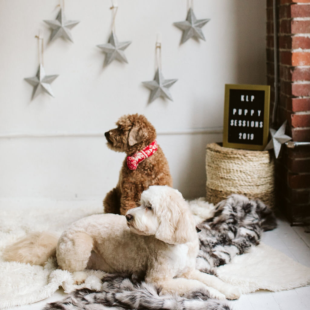 Puppysessions-22.jpg