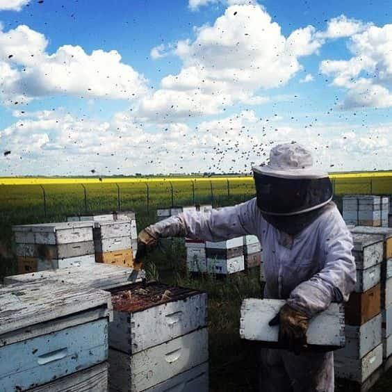 bee farm / image:  pinterest