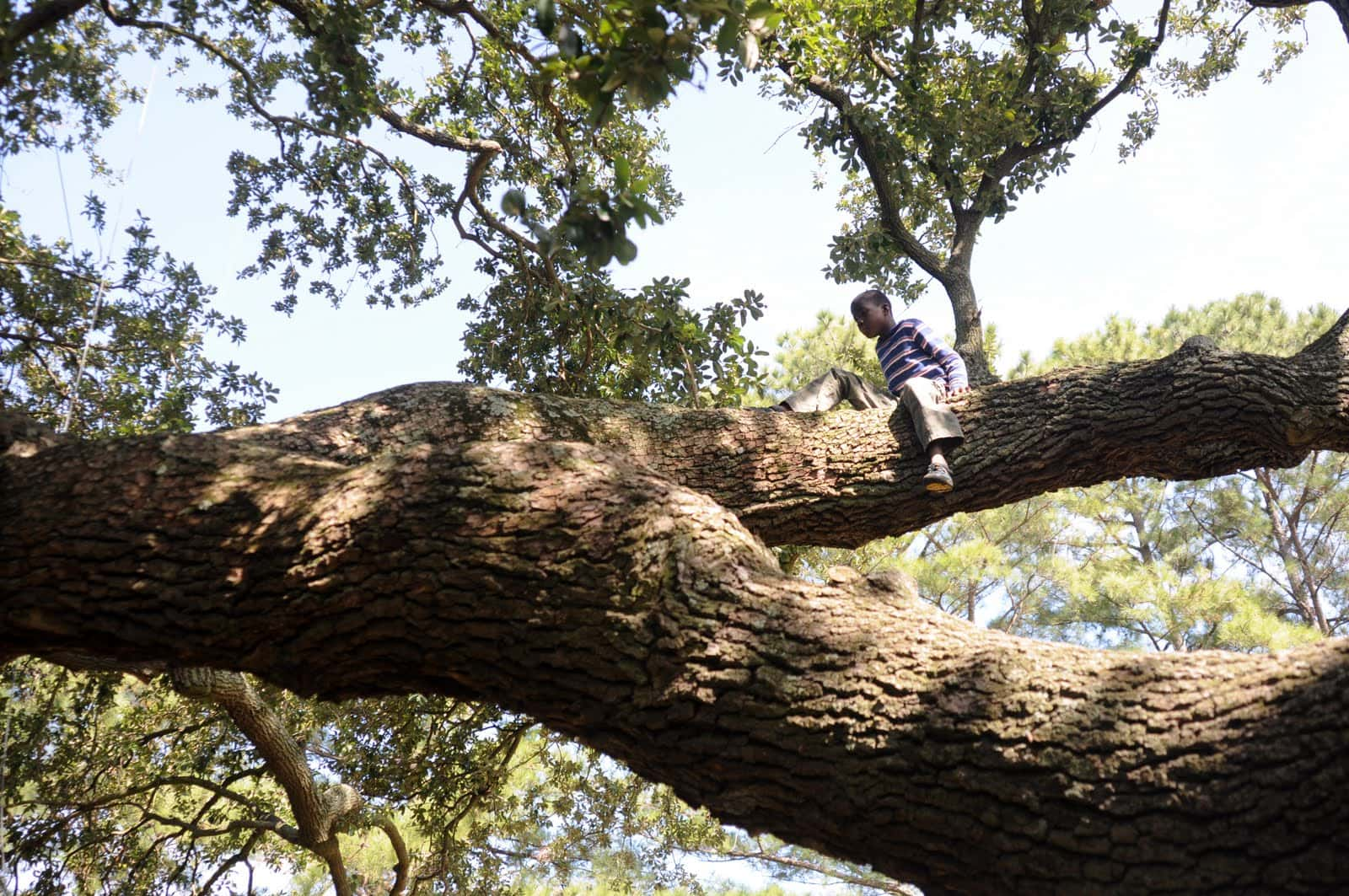 Emancipation Oak in Hampton VA / image: Remarkable Trees of VA