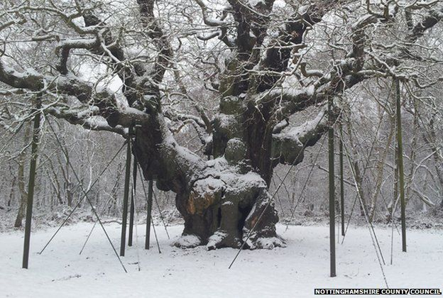 When it snows people see Friar Tuck sitting in the trunk, fat and happy. / Image:  BBC