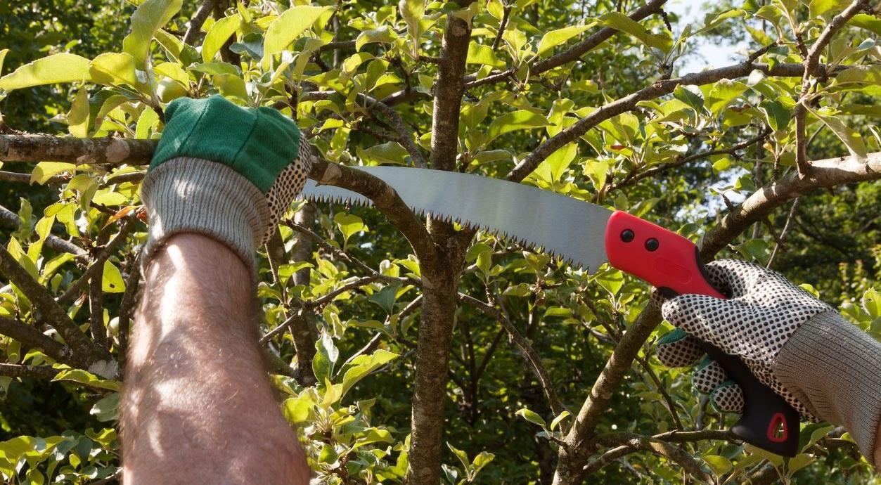 pruning-saw.jpg