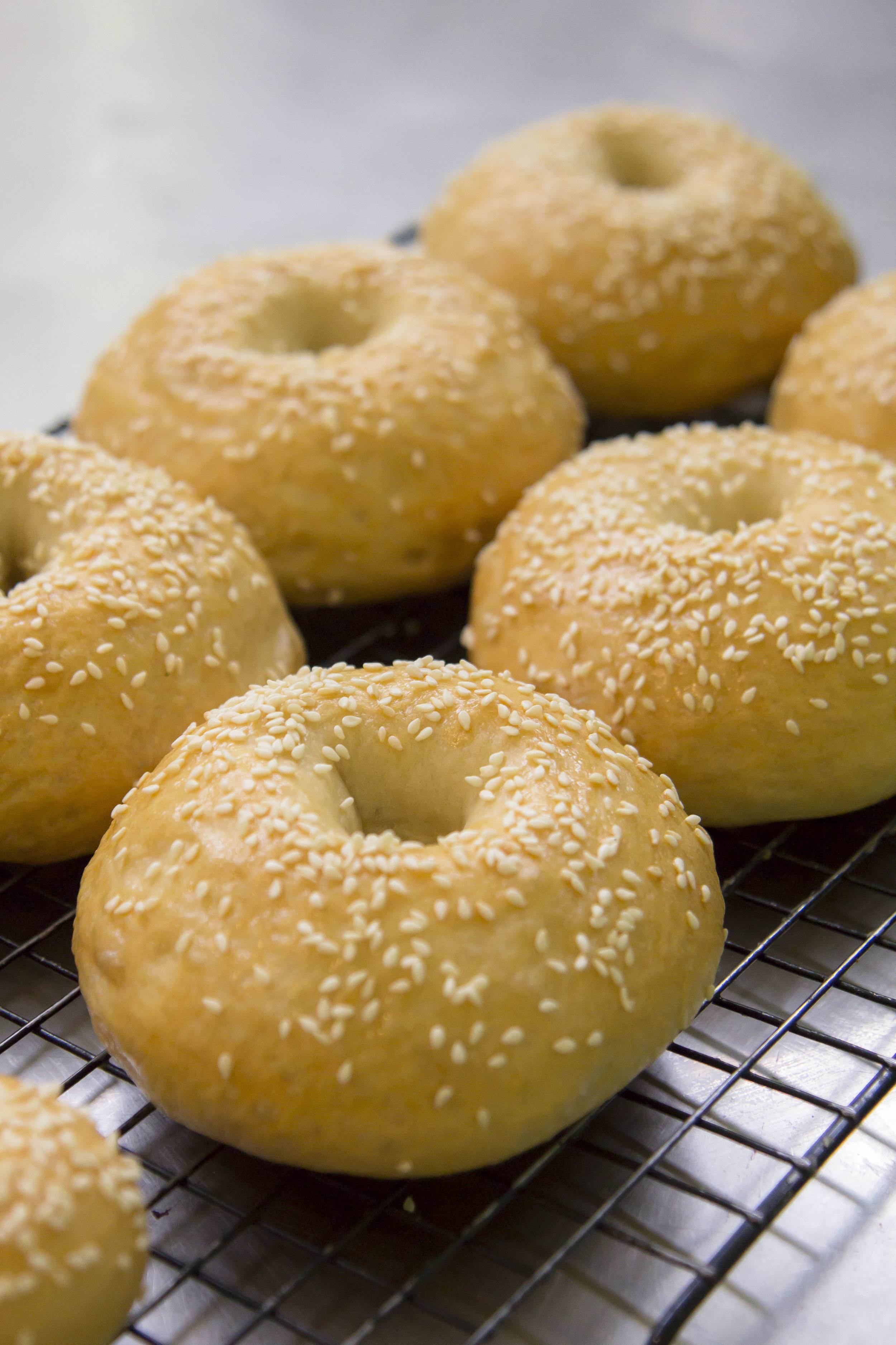 New York style Bagel with Cream Cheese  40