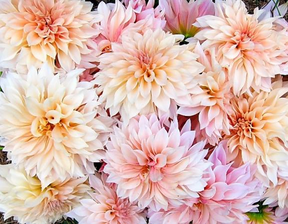 Bouquet of Flowers -