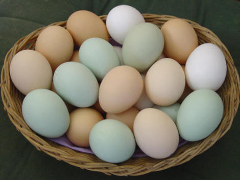 Pasture Raised Eggs -